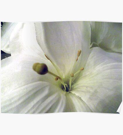 White on White Poster