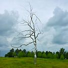 Steel Tree by Jonathan Green by Jonathan  Green