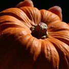 Baby Pumpkin by randomness