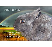 Sypathy card for loss of pet rabbit Photographic Print