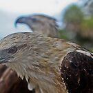 Sea Hawk  by Ryan Conyers