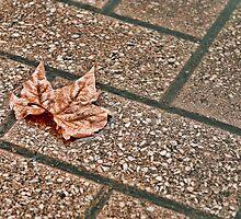 Lone Autumn leaf by RickyC