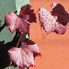 Autumn Brilliance by Ian Ker