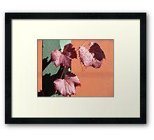 Autumn Brilliance Framed Print