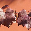Autumn Vine after the Rain by Ian Ker