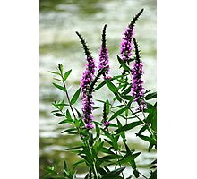 Wildflower Beauty Photographic Print