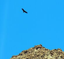Condor  , Patagonian Andes by geophotographic