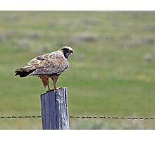Red Tail Photographic Print