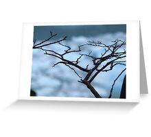 Patagonian Flora , Patagonia Argentina  Greeting Card