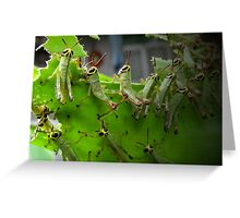A swarm of leaves-eaters... Greeting Card