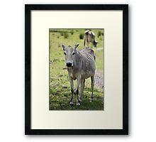 Sick Cow Framed Print