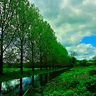 Poplars On The River Allan by delros