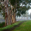 Morning Walk by Kerry  Hill