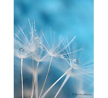 Dandelion blues Photographic Print