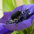 Purple Platter by Jayne Le Mee