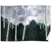 White aspens in green  forest Poster
