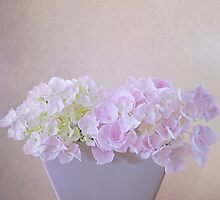 Hydrangea Portrait by AnnieD