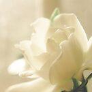 Gardenia by Carina Potts