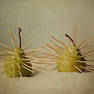 A Prickly Pair by PinkK