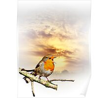 Robin At Sunset  Poster
