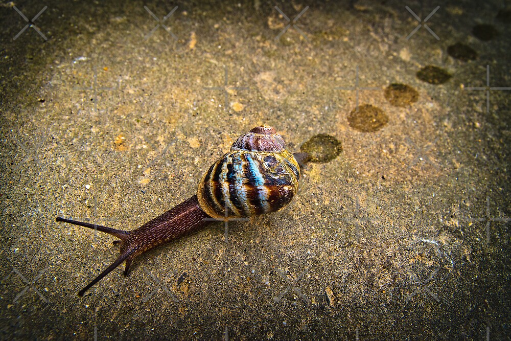 Snail Trail...... by Geoff Carpenter