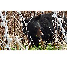 Smoky Mountain Bear Photographic Print
