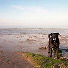 Shela on Llanfairfechan beach. by Michael Haslam