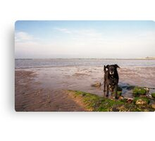 Shela on Llanfairfechan beach. Canvas Print