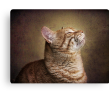 Feline Meditation Canvas Print