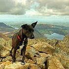 Tarn the Terrier.... on High Stile by Jamie  Green