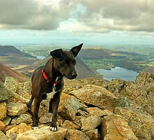 Tarn the Terrier.... on High Stile by Jamie  Green