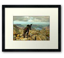 Tarn the Terrier.... on High Stile Framed Print