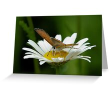 Soft landing Greeting Card