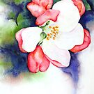 Apple Blossom by Kay Clark