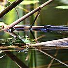 Froggin Around by Kristi Harkins