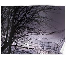 Trees at Night Poster