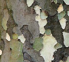 Tree Bark Camouflage (Sycamore Tree) by M. van Oostrum