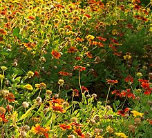 Wildflower patch with a punch by ♥⊱ B. Randi Bailey