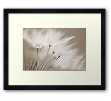 Sepia Dandelion Clock and Water Droplets Framed Print