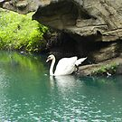 Swan by LunaLuxPhoto