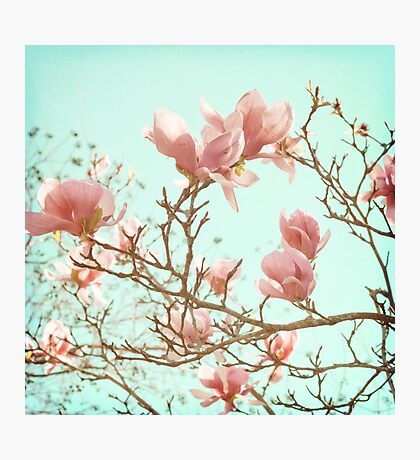 Japanese Magnolias Photographic Print