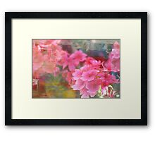 Painted Pink Framed Print