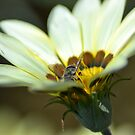 Busy Bee by TheaShutterbug