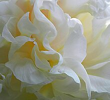 Peony Petals^ by ctheworld