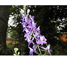 Pretty Purple Flowers Photographic Print