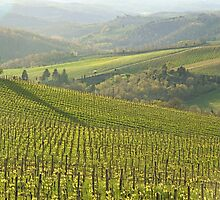 Vigneti in Chianti by gluca