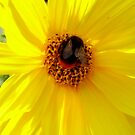 Bee & Yellow flower by Florem