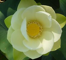Lovely Lotus by Anthea  Slade