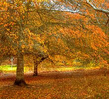 Colours of Autumn II - Mt Lofty Botanic Gardens, Adelaide Hills, SA by Mark Richards