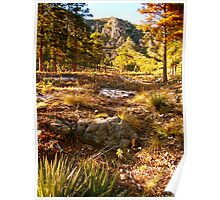 """Hiking Oak Creek Canyon"" Poster"